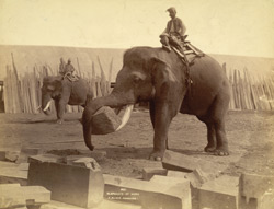 Elephant at work [Rangoon] 88122